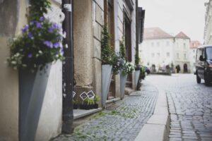 Hopfen, Hopfenjungpflanze, junger Hopfen, behopf die stadt, innstadt bräu, passau, guerilla marketing